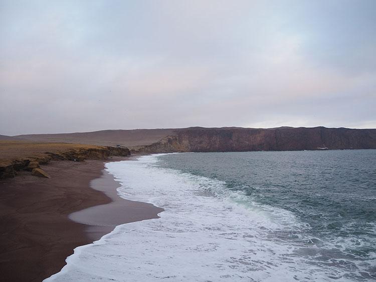 Réserve Paracas Pérou Année Sympathique