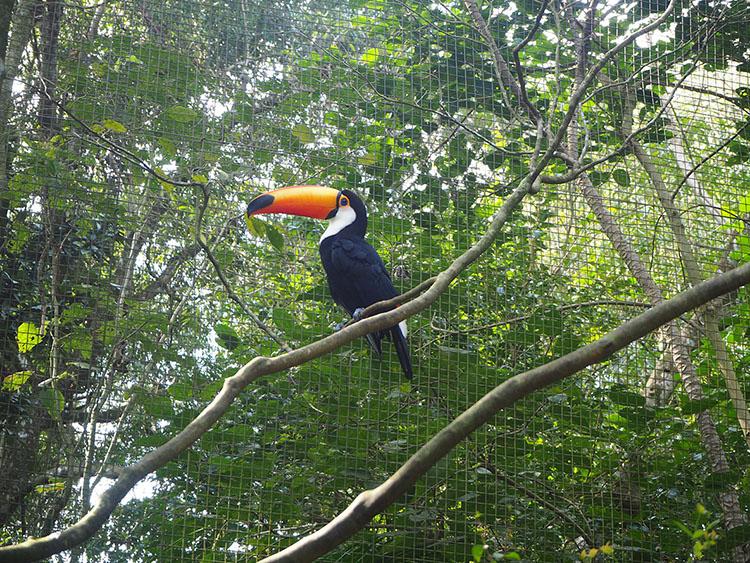 Parc aux oiseaux Iguacu Brésil Année Sympathique
